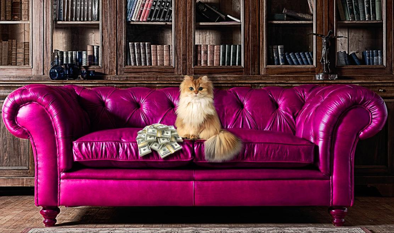 Fluffy cat_wp